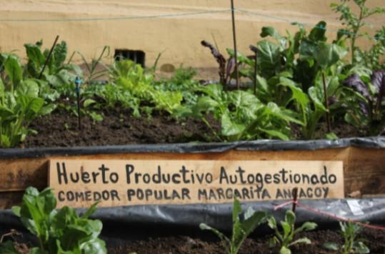 El huerto productivo autogestionado también lleva el nombre de Margarita Ancacoy, como homenaje a ella, y porque es parte del comedor popular. 14 de agosto de 2021. (Foto: Isidora Varela L.)